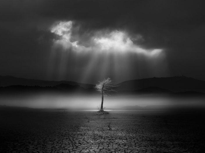 "Asier Garagarza ""Dead Forest"" (España)"