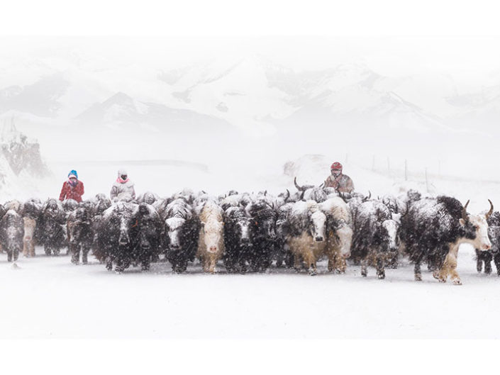 "CEF Honourable Mention - Jingquan Zhou ""Grazing back in the snow"" (China)"