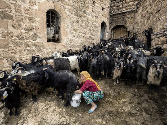 "Buket Ozatay ""Dairy Farm"" - Diploma Chairman"